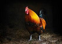 Red rooster von Susan Isakson