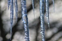 Blue Icicles by ushkaphotography