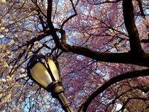 Springtime-in-central-park