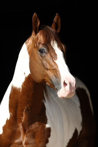 Udomi jednog od konja! - Page 4 A8ff85b37895d52e168f4b2efec3a152