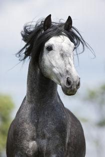 Udomi jednog od konja! - Page 4 A8ff85b37895d52e168f4b2efec69d8a