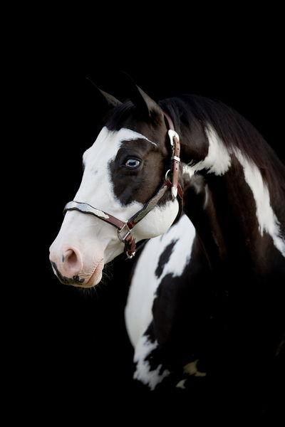 Udomi jednog od konja! - Page 6 A8ff85b37895d52e168f4b2efece3342