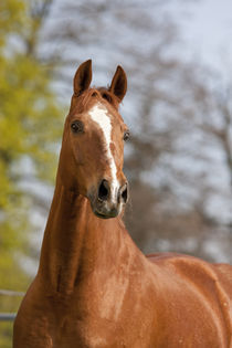 My horses (plz check out my humans so you can see their owners) - Page 2 A8ff85b37895d52e168f4b2efecee85a