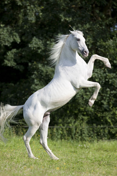 """Tiger Horse Pictures """"tiger Horse Christiane"""