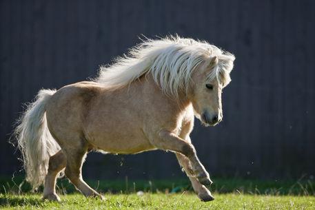 Udomi jednog od konja! - Page 6 C4b75445102068118dbb8ad056ece114