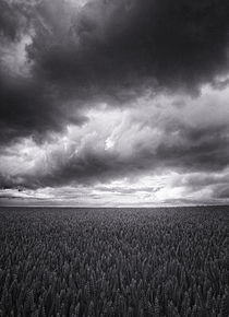 Summer Storm by Geoff du Feu