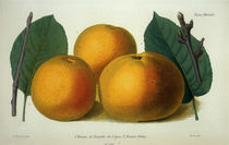 Apfel/Pomme de Reinette/Robin/Farblitho by AKG  Images
