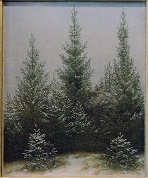 C.D.Friedrich, Fichtendickicht im Schnee by AKG  Images