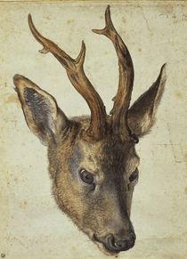 A.Duerer, Kopf eines Rehbocks von AKG  Images