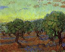Van Gogh, Olivenhain von AKG  Images