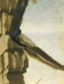S.Botticelli, Pfau by AKG  Images
