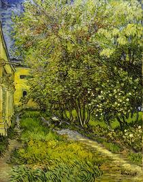 V.van Gogh, Garten Hospital St.Remy von AKG  Images