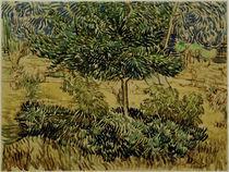 v.Gogh, Baum und Straeucher im Garten.... von AKG  Images
