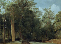 C.Corot, Lichtung im Wald von Fontainebl by AKG  Images