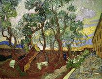 V.van Gogh, Garten des Hospit.St.Paul von AKG  Images