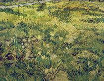 V.van Gogh, Wiese im Garten d.Hospitals by AKG  Images