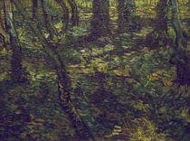 V.van Gogh, Unterholz mit Efeu von AKG  Images