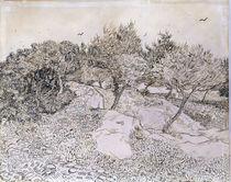 van Gogh, 'Olivenhain bei Montmajour' von AKG  Images