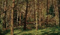 W.Leistikow, Wald (Walddickicht) by AKG  Images