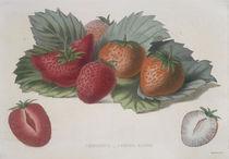 Erdbeere / Farblithographie von AKG  Images
