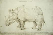 A.Duerer, Rhinozeros / Federzeichnung by AKG  Images