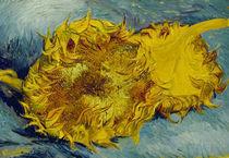Van Gogh/Zwei abgeschnittene Sonnenbl. by AKG  Images