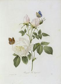 Teerose / / Redoute 1835 Nr.123 von AKG  Images