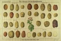 Tafel der Kartoffelsorten / Graser's by AKG  Images