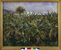 A.Renoir, Champ de bananiers by AKG  Images