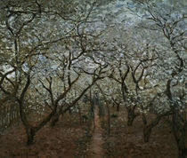 C.Monet, Bluehender Obstgarten von AKG  Images