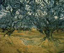 V.van Gogh, Olivenbaeume / 1889 von AKG  Images