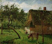 C.Pissarro, Obstgarten in Varengeville von AKG  Images