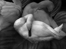 I Dreamt of Swans von dayle ann  clavin