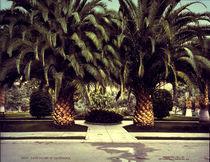 Dattelpalmen, Kalifornien / Foto 1901 von AKG  Images