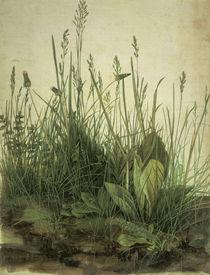 A.Duerer, Das Grosse Rasenstueck von AKG  Images
