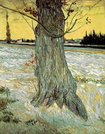 Van Gogh/ Der Baum/ 1888 by AKG  Images