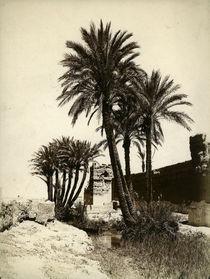 Dattelpalmen Marokko / Foto um 1900 by AKG  Images