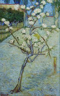 van Gogh, Birnenbaum in Bluete von AKG  Images