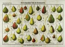 Birnensorten / Grasers Tafel by AKG  Images