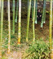 Mann in einem Bambushain / Foto von AKG  Images