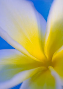 Hawaiian Flower by Janice Sullivan