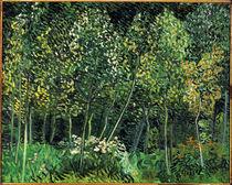 van Gogh, Waeldchen by AKG  Images