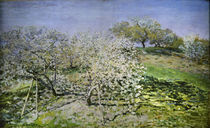 C.Monet, Fruehling. Bluehende Apfelbaeume by AKG  Images