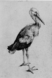 A.Duerer, Storch by AKG  Images