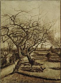 v.Gogh, Garten des Pfarrhauses in Nuenen by AKG  Images