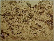 V.van Gogh, Olivenhain by AKG  Images