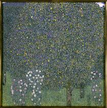 Gustav Klimt, Rosenstraeuche unter Baeumen von AKG  Images