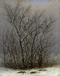 C.D.Friedrich, Gebuesch im Schnee von AKG  Images