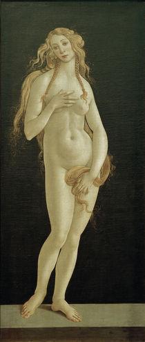 Botticelli (Werkstatt), Geburt der Venus by AKG  Images