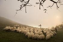 Basque shepherd 001 by Ander Gillenea
